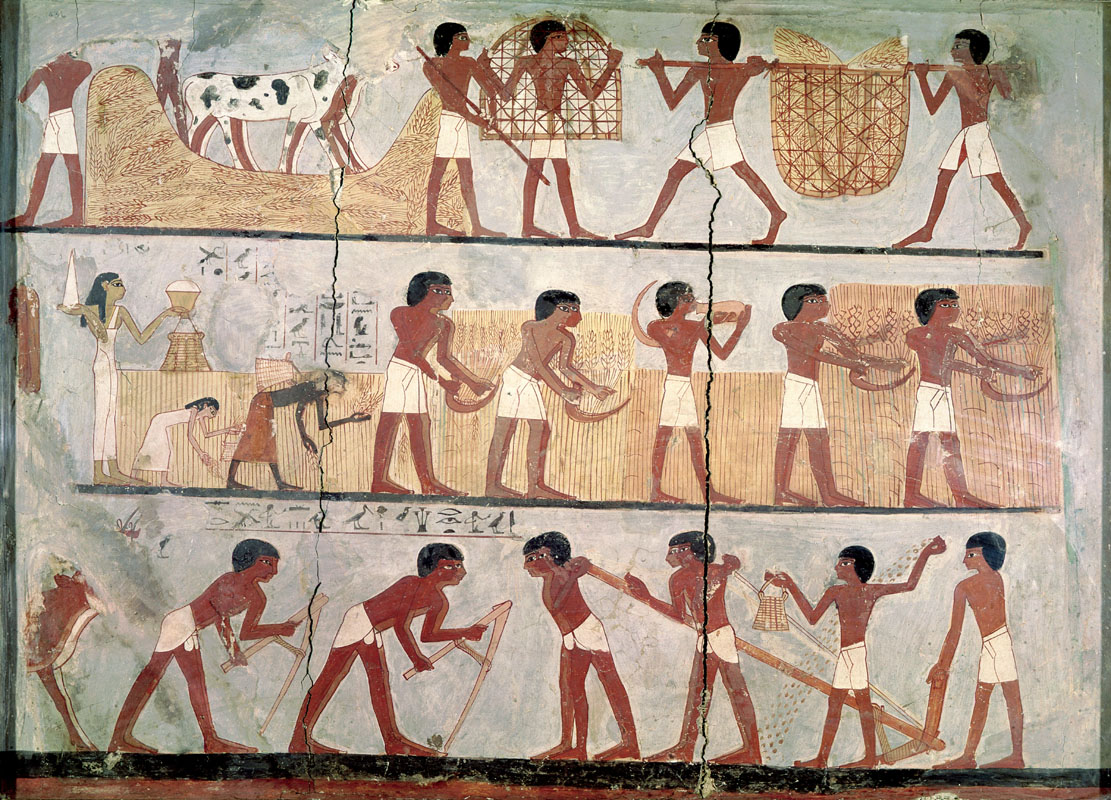 Bức tranh tường từ một ngôi mộ Ai Cập, mô tả những cảnh sinh hoạt nông nghiệp.
