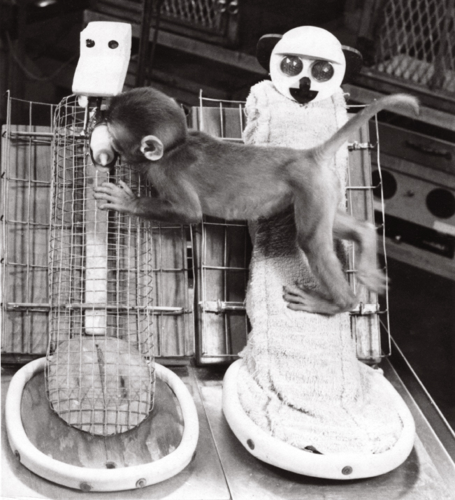 Con khỉ mồ côi của Harlow