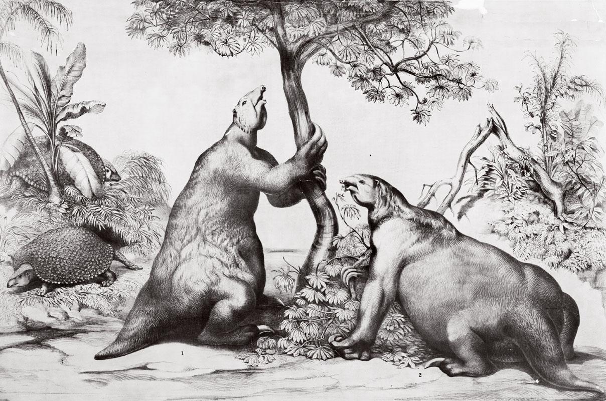 Hai con lười mặt đất khổng lồ (Megatherium)