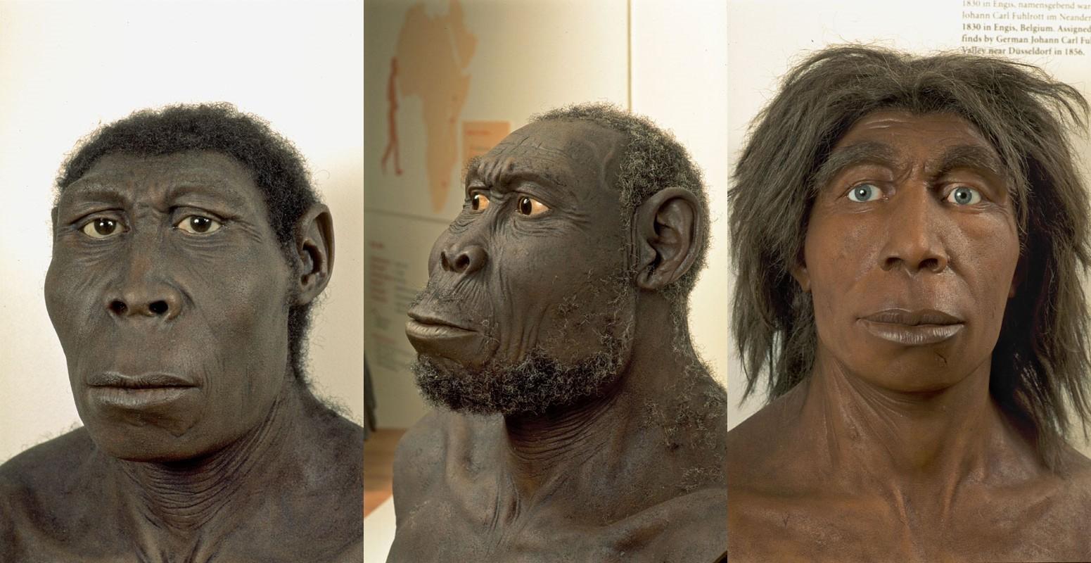 Họ hàng của loài người: Homo rudoltensis (Đông Phi); Homo erectus (Đông Á); và Homo neanderthalensis (châu Âu và Tây Á).