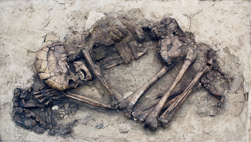 Con chó được chôn trong ngôi mộ cổ ở phía Bắc Israel